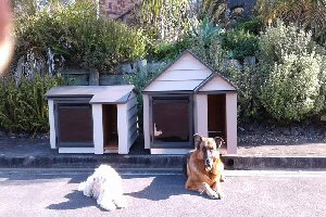 Matching dog kennels big and small dog